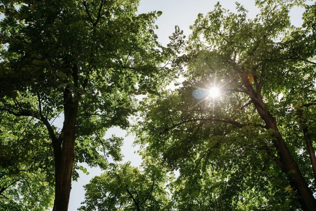Solsken genom trädkronor
